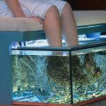 Alternative Methode: mit Fischen gegen Hornhaut