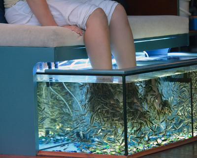 Fischpediküre durch Kangalfische