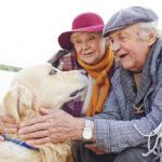 Hunde für Senioren